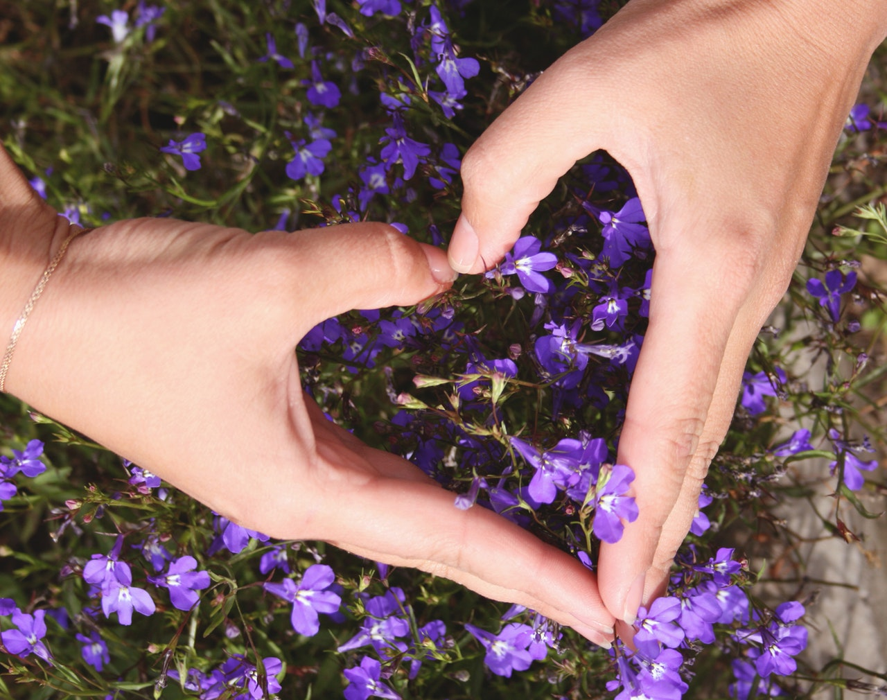紫の花と手で作ったハート