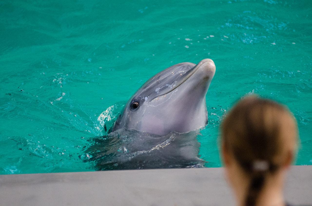 イルカを見ている女性