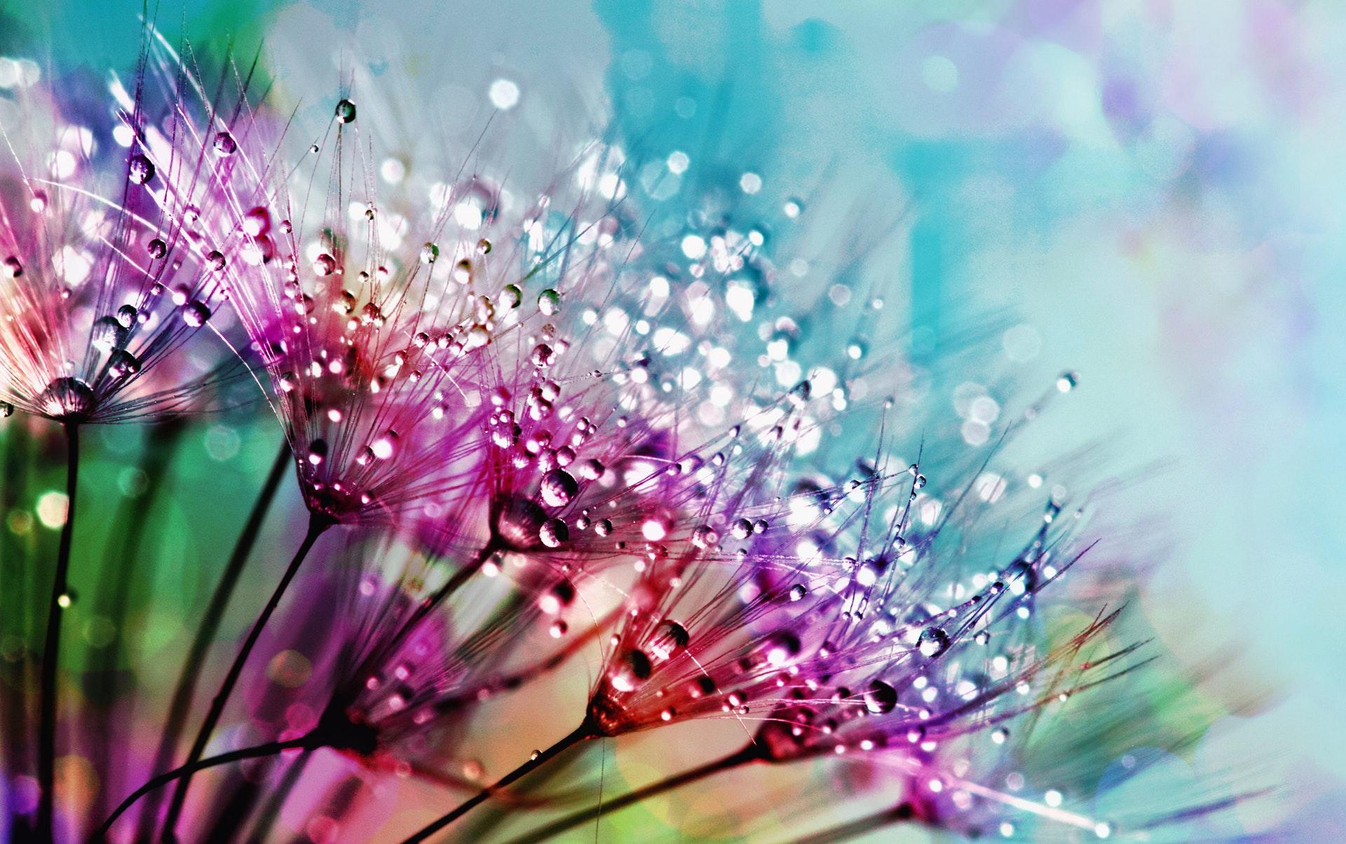露に濡れた花