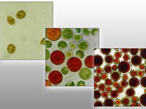 世界初の藻類の高濃度・連続培養装置を活用した研究職