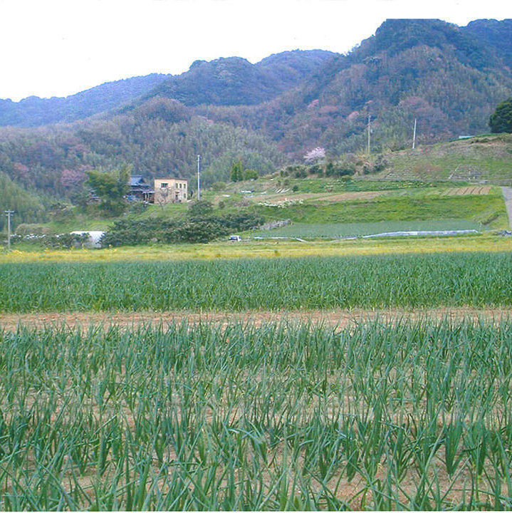 Okayama autologous farm than direct delivery of the pesticide is not used fresh vegetables.