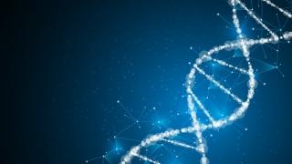 個人の遺伝子の違いがCR充填の予後に与える影響 米国
