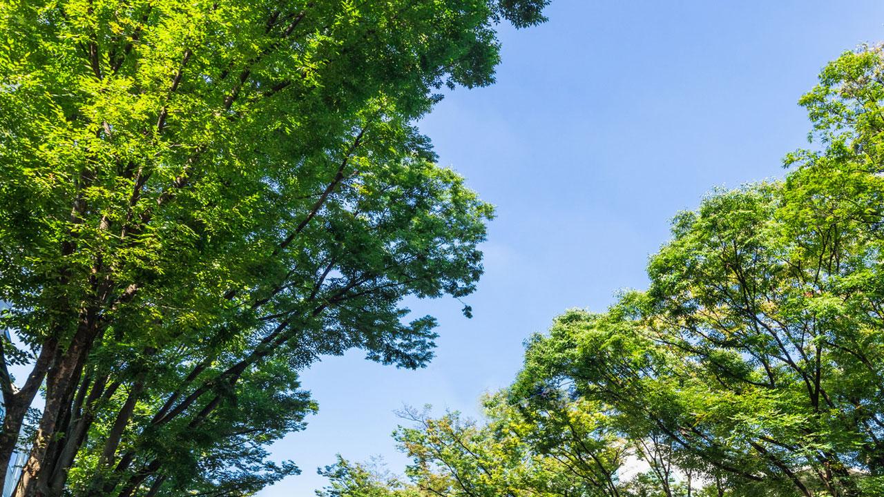 植物由来成分に歯周病予防効果 新潟大、小林製薬の画像です