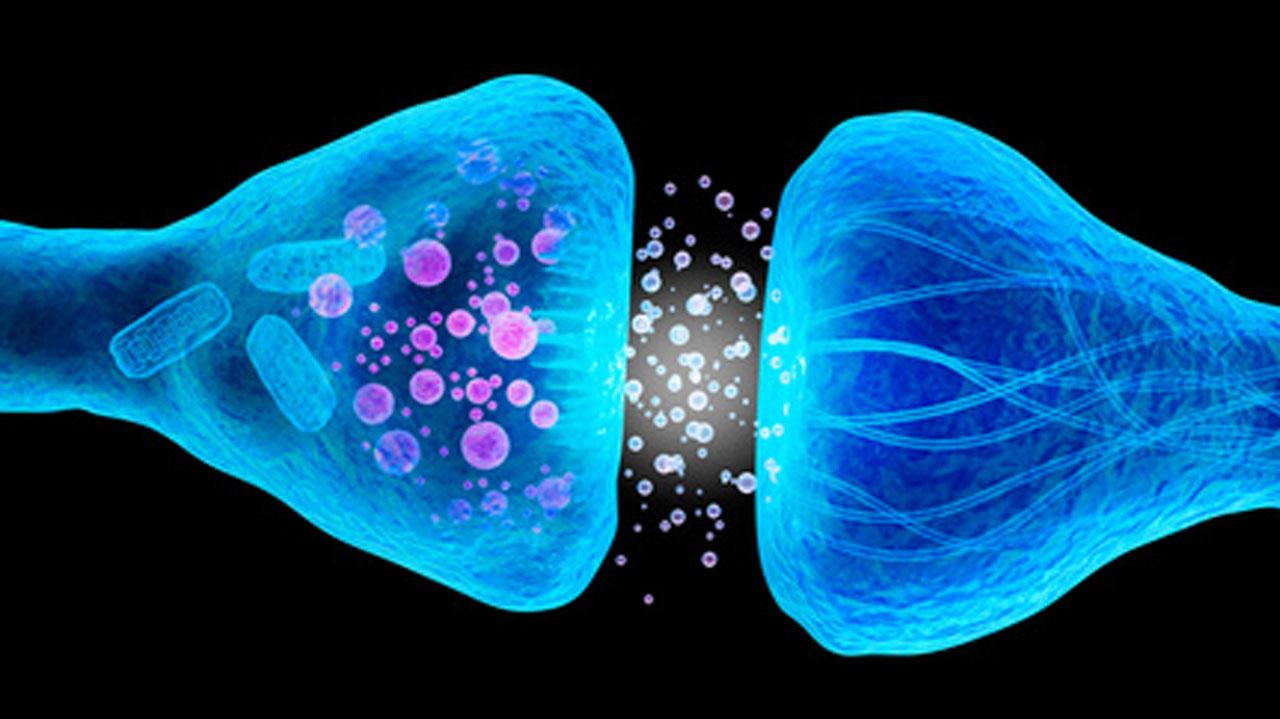 口腔がんの腫瘍壊死を誘発する新たな標的物質を発見 岡山大の画像です