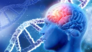 アルツハイマー病を悪化させるジンジバリス菌の新たな病原因子を同定ー九州大