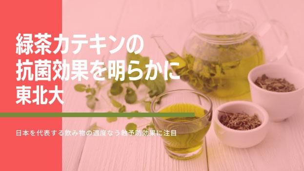 緑茶カテキンの抗菌効果を明らかに 東北大の画像です
