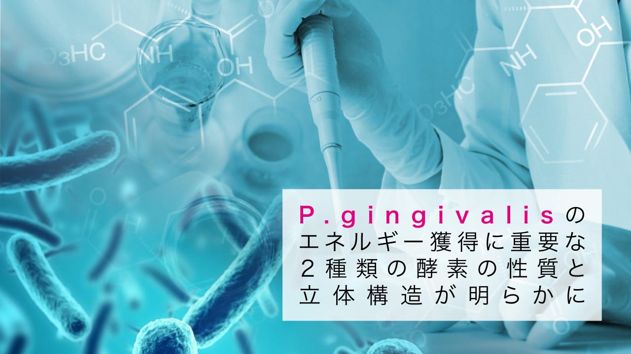 P.gingivalisのエネルギー獲得に重要な2種類の酵素の性質と⽴体構造が解明 岩手医科大の画像です