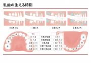 乳歯の生える時期