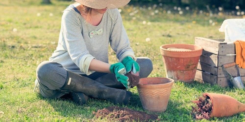 園藝維護的專業服務