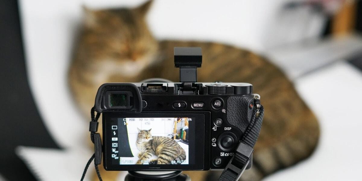 寵物攝影的專業服務