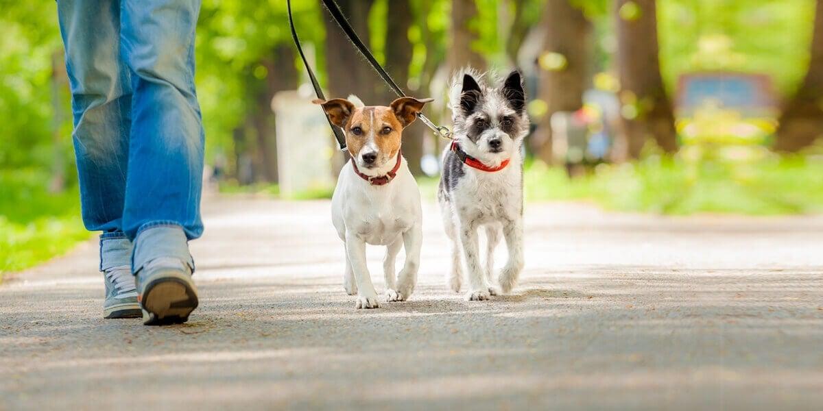 寵物散步的專業服務