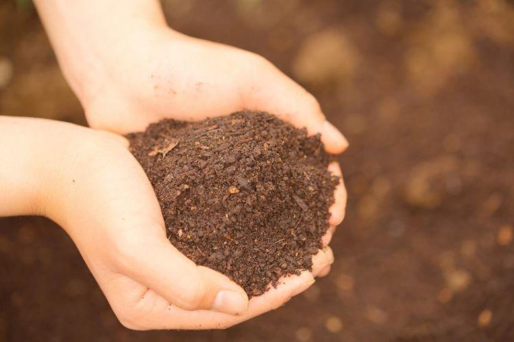 土壌改良資材の特性を知って土づくりに役立てよう!