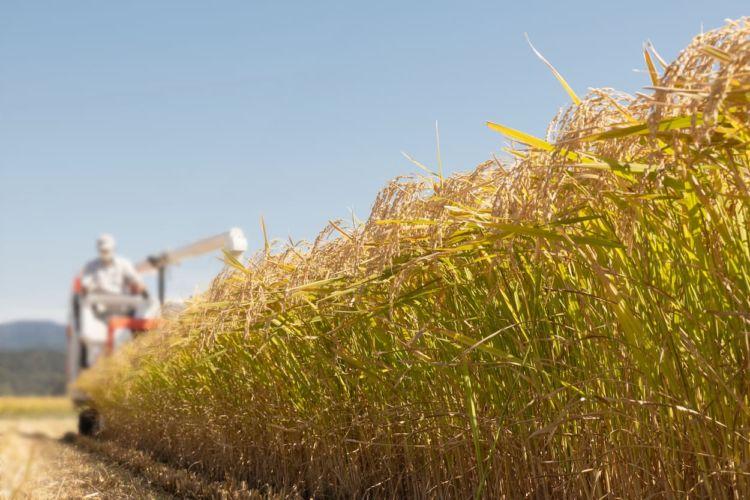 どこまでが農業所得?どこまでが経費?新規就農者のための確定申告ガイド
