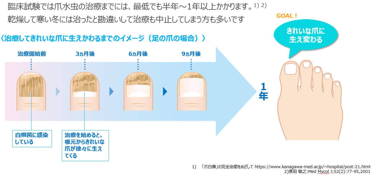 図3:きれいな爪に生え変わるまでの期間