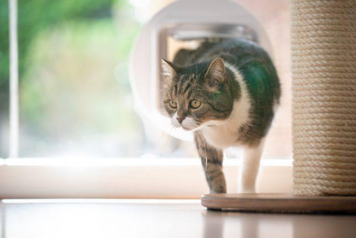 希少なネコ共生、ローコストRC賃貸住宅の完成見学会~大家さんの窓口見学会~0