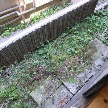 お庭。狭いです。お向かいさんがすぐ近く。