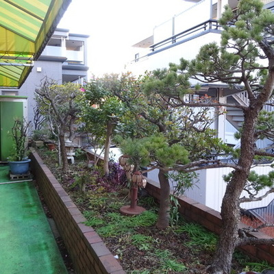 立派な松の木のあるルーフバルコニー!