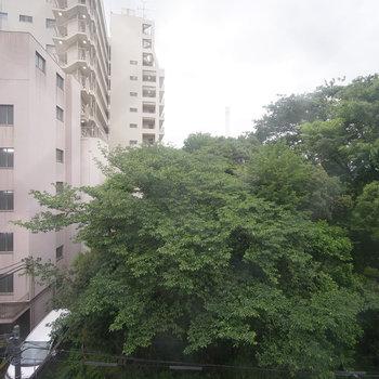窓からは、公園の緑と恵比寿方面のビル群が望めます。