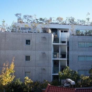 緑とともに地域に根ざす。屋上テラス付きのデザイナーズマンション!!
