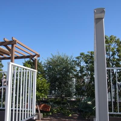 屋上庭園は剪定中でした。