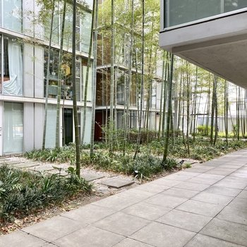 風情ある竹が並ぶ、中庭。