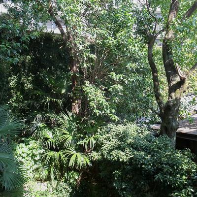 窓の外には木々がそよぐ、気持ちよい部屋です。