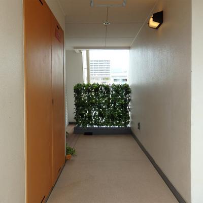 廊下の柵には緑