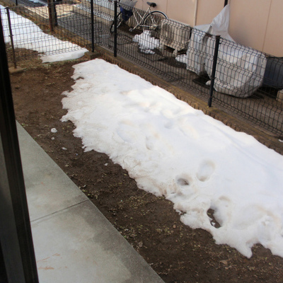 雪景色ですが・・・、季節をかんじさせてくれる、庭なんです。
