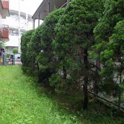 1階の角部屋、緑が茂り目隠しに※前回募集時の写真です