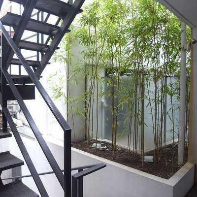 共用スペースには竹が!
