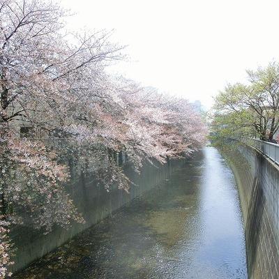 春にはお部屋に行く道のりには川沿いの桜が見えます