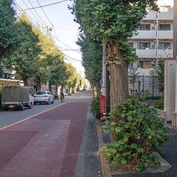 緑があって落ち着く街並み。