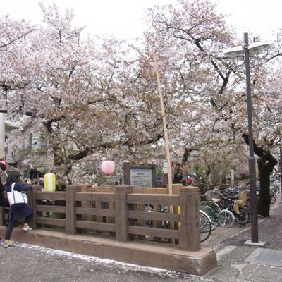 駅からの途中に川沿いの桜並木が最高!