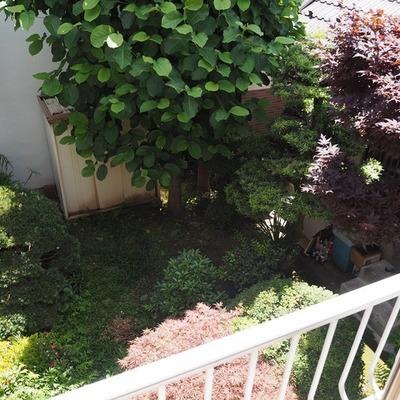 中庭のようなスペースには緑があります。