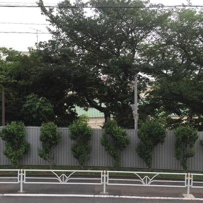 眺望です。木々!一階ですが高さがあります。※写真は前回募集時のものです