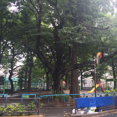 緑いっぱいの公園が目の前