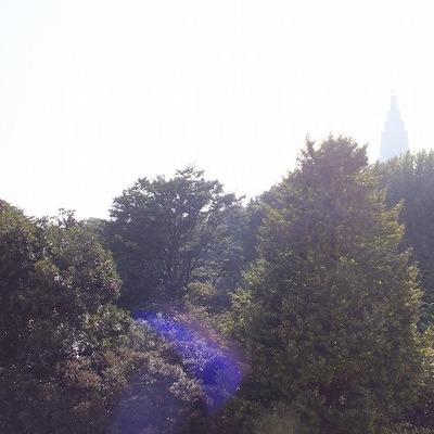 新宿御苑を自分の庭に!
