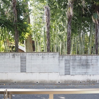 目の前は竹林です。