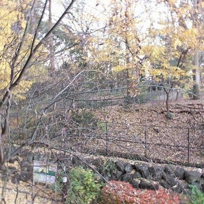 林試の森公園が庭のよう。
