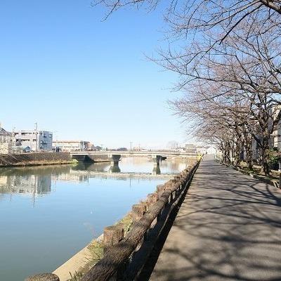 川沿いは桜並木に