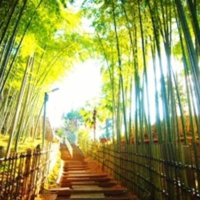 京都を思わせる、美しい竹林もあります