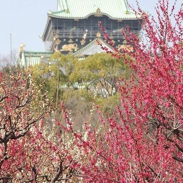 あれが大阪城だよ。