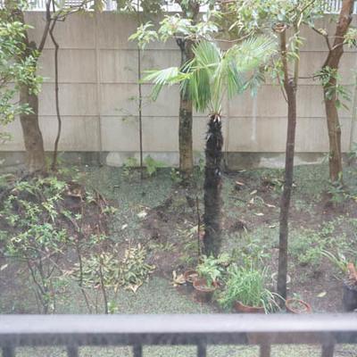 裏庭が見えます。サッシはそのままです。