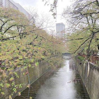 目の前を流れる目黒川は、春に多くの花見客や出店で賑わいます。