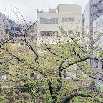 【南東側】目の前には目黒川の桜の木!