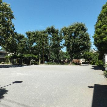 近くには公園があります。