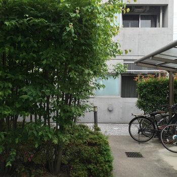 駐輪場と目隠しの緑。