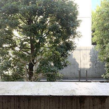 【1F バルコニー】目の前には先程見た木々。
