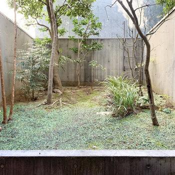 【B1 専用庭】目の前に広がる緑を眺めたら、心もフレッシュになりますね。