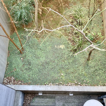 【1F バルコニー】専用庭はこんな感じになっています。